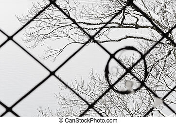 Winter - View of snow-covered branches through the grate