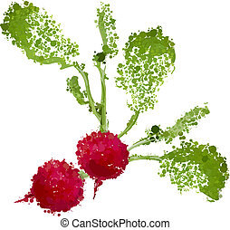 fresh radishes vector illustration of blots