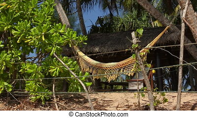 Palms and Hammock.