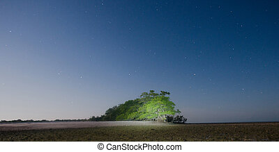 Lit Tree in the Ten Thousand Island