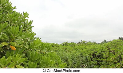 Green tropical jungle - Tropical jungle background