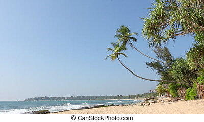 Tropical white sand virgin beach - Tropical white sand beach...