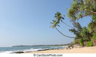 Tropical white sand virgin beach - Tropical white sand beach...