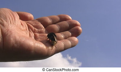 Hand, blue sky and bumblebee