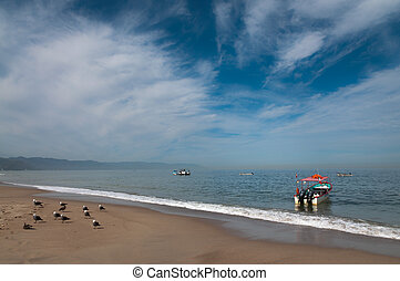 Boats and seagulls at the beach in Banderas bay