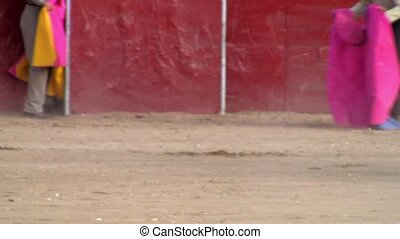 spanish bullfight, powerful bull