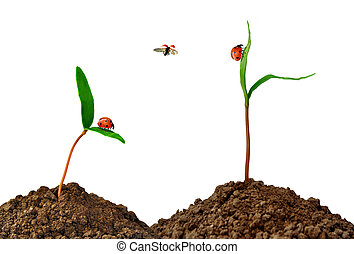 Growing green plant with ladybug isolated on white...