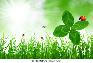 Fresh green grass with clover and ladybirds on green natural...