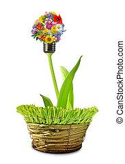 bulb from flowers in pot isolated