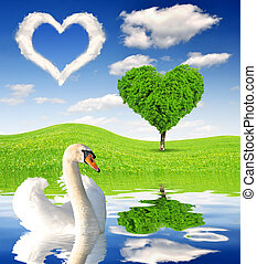 Spring landscape with swan