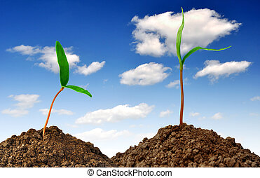 Growing green plant on blue sky
