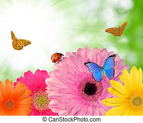 gerberas with butterflies