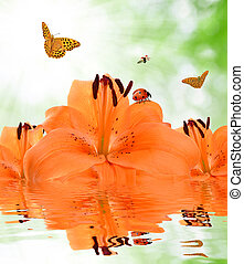 orange lily with butterflies and ladybugs