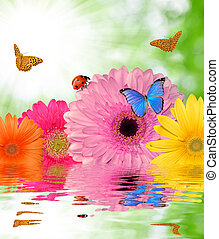 gerberas with butterflies and ladybug