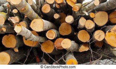 felled trees, shooting slider