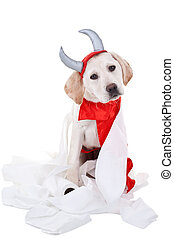 Bad Dog - Bad Labrador retriever puppy dog in devil costume...