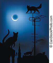 Cats on the roofs in the night sky
