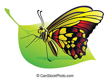 butterfly on a leaf on a white background