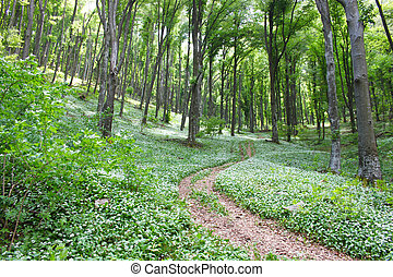 spectacular landscape in the forest during the spring