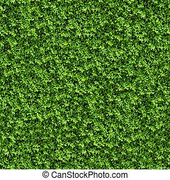 vert, buisson, Seamless, texture