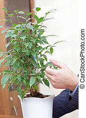 Businessman hands handling plant in office