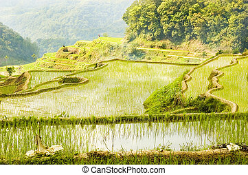 Sunrise in Banaue, Philippines