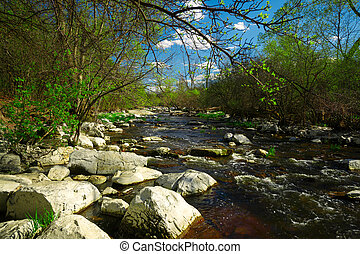 Babbling Brook in the Forest - The shallow rapids of a...