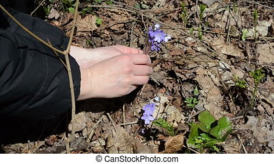 pick forest flower - girl in the forest picks small violets...