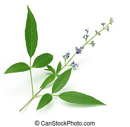 Vitex Negundo or Nishind - Vitex Negundo or Medicinal...