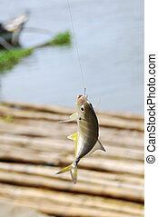 Small fish caught in one of the rivers in Tacloban City, Philippines