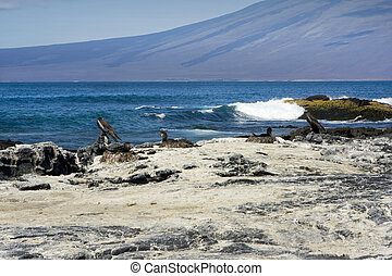 635 Nesting birds on a Galapagos Island beach - Nesting...