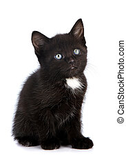 Black small kitten Kitten on a white background Small...