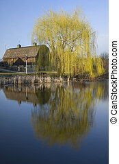 Barn and Willow Tree on Pond - Barn on Farm bordering pond...