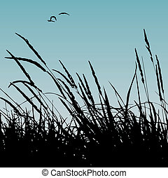 reeds - vector illustration of some reeds