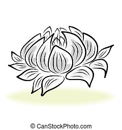 hand drawing water lily flower - hand drawing water lily,...