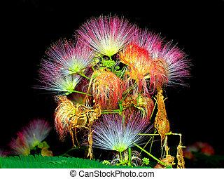 Formosa - Flower closeup