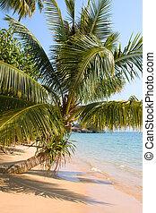 Beach , Thailand . - Beautiful tropical beach in Koh Mak ,...