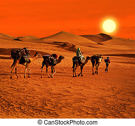 The Berbesky tribe passes the desert in Africa