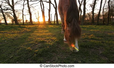 Sunset pony. Three shots. Cambridgeshire, UK.