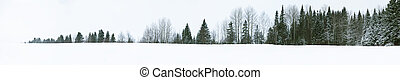 straight tree line - Just a nice line of trees on a lake A...