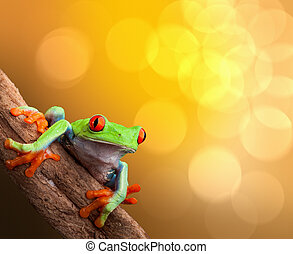 red eyed tree frog on vibrant background in tropical...