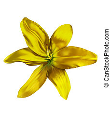 lilly flower - yellow green lilly flower isolated