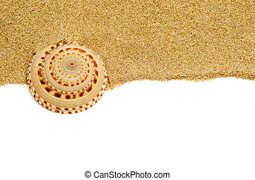 seashell on the sand - closeup of a seashells on the sand,...
