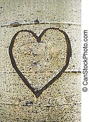 Heart Carved on Aspen Bark