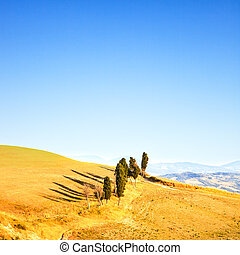 Tuscany, rural landscape. Cypress trees in a row