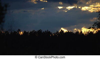sunset over pine forest edge - sunset timelapse view on...