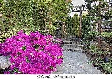 Pink Azaleas Blooming Along Garden Path - Pink Azaleas...