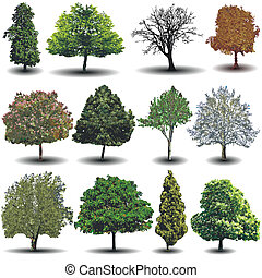 different vector trees - A collection of different photo...
