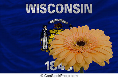 gerbera flower in front flag of american state of wisconsin...