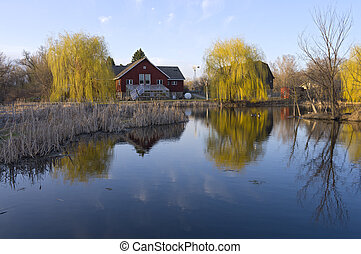 Barns Reeds and Willows on Pond - Barn buildings on Farm...